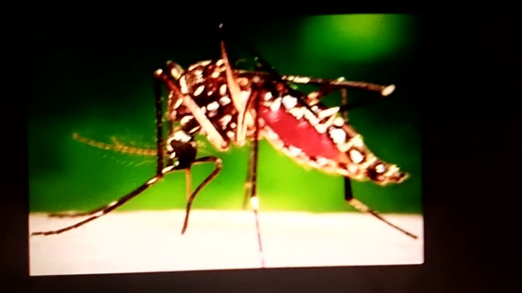 Mosquito borne diseases in West Indies and Africa how to fight prevent treat.  Ebola Dengue Chick V